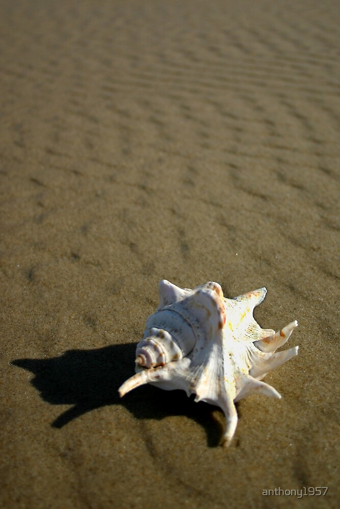 Shell by anthony1957