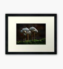 Fungus eats fungus Framed Print