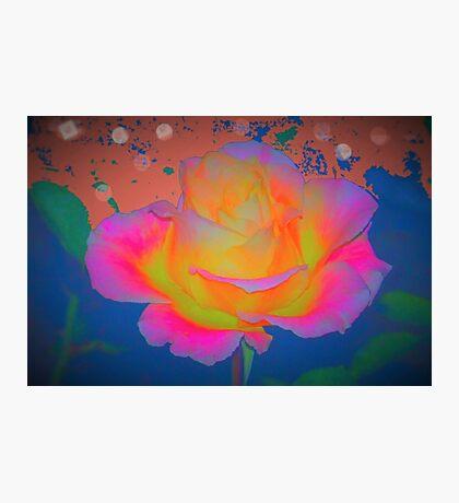 Rose color blast Photographic Print