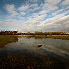 Grenham Common in Autumn by Samantha Higgs