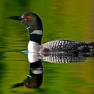Common Loon by Jim Cumming