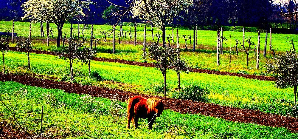 Pretty pony by honey