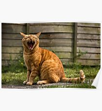 Adorable cat yawning Poster