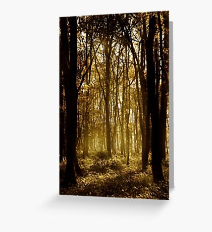 Woodland - Greenham Common Greeting Card