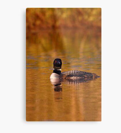 On Golden Pond - Common Loon Metal Print