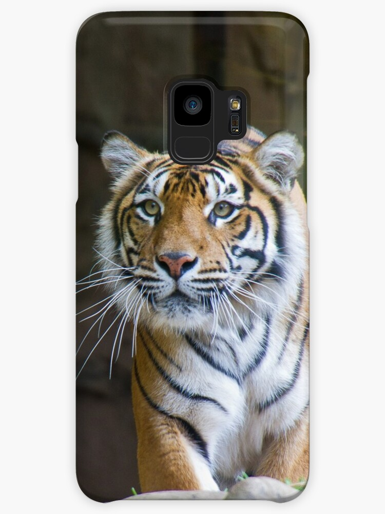 Tiger by Ian Fraser