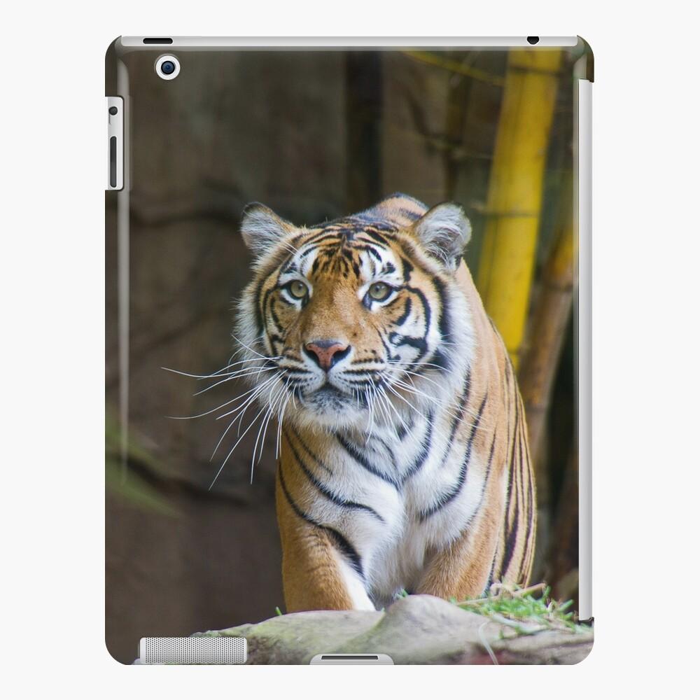 Tiger iPad Case & Skin