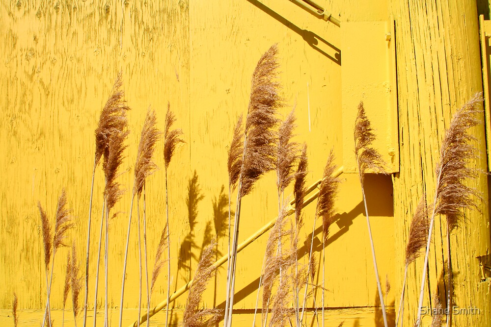 Yellow by Shane Smith