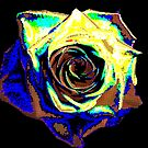 Tartin Rose (experimental) by Jayson Gaskell