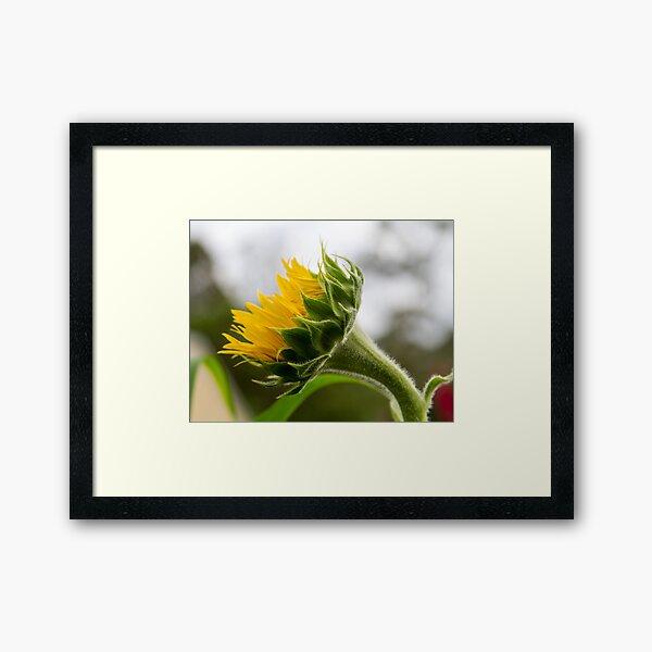 Seeking The Sun Framed Art Print
