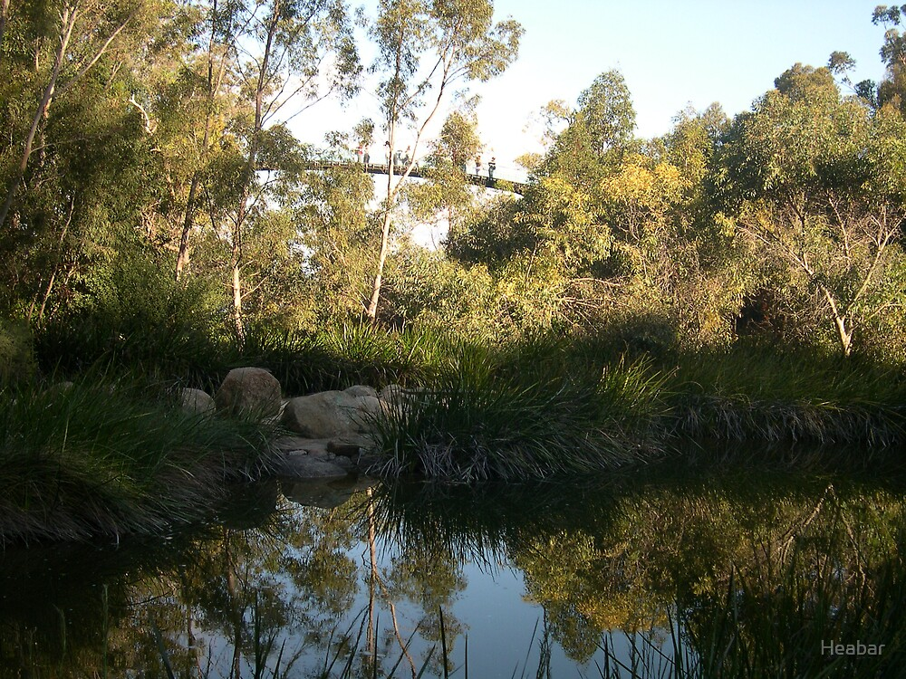Afternoon reflection Kings Park W.A. Australia.  by Heabar