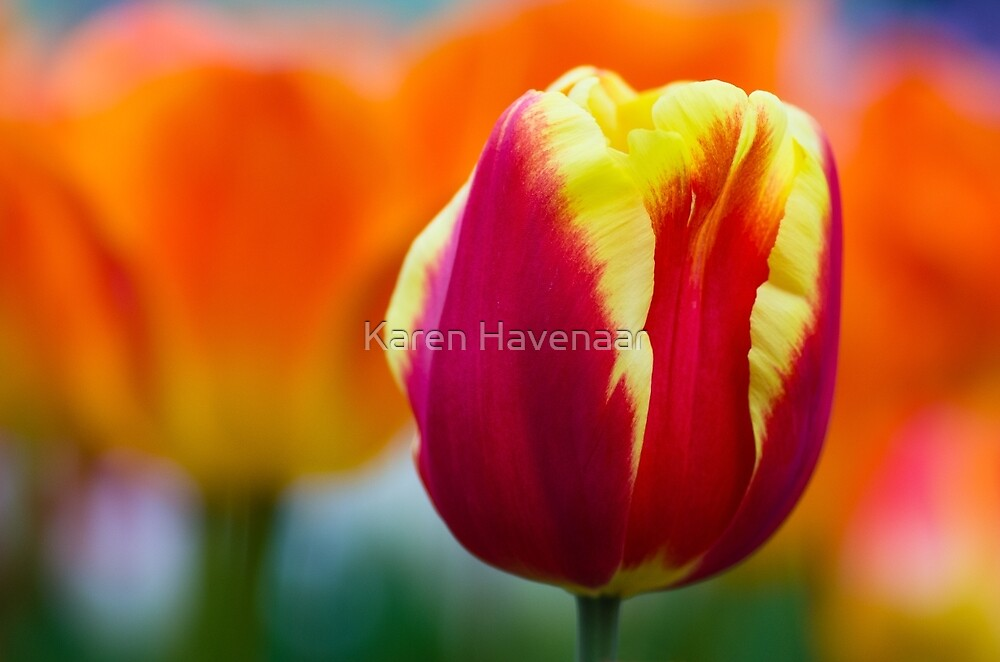 Red, Orange & Yellow by Karen Havenaar