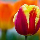 Red, Orange & Yellow by Karen Havenaar