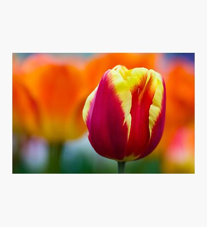 Red, Orange & Yellow Photographic Print