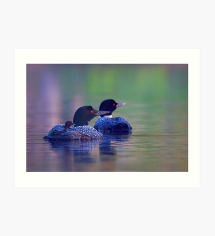 Morning outing - Common loon Art Print