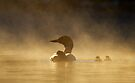 Loons in the mist - Common Loon by Jim Cumming