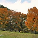"""Fall 2009 - West Knoxville, Tennessee - 4""... prints and products by Bob Hall©"
