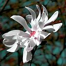 Majestic Magnolia by Leeo