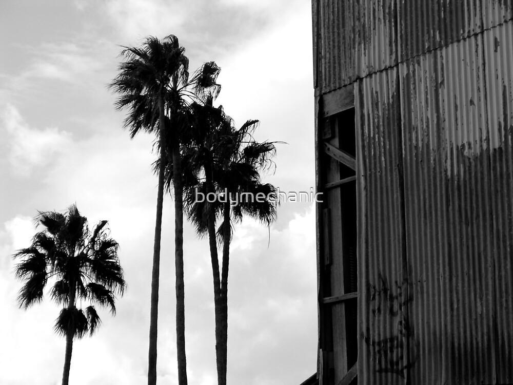 palms by bodymechanic
