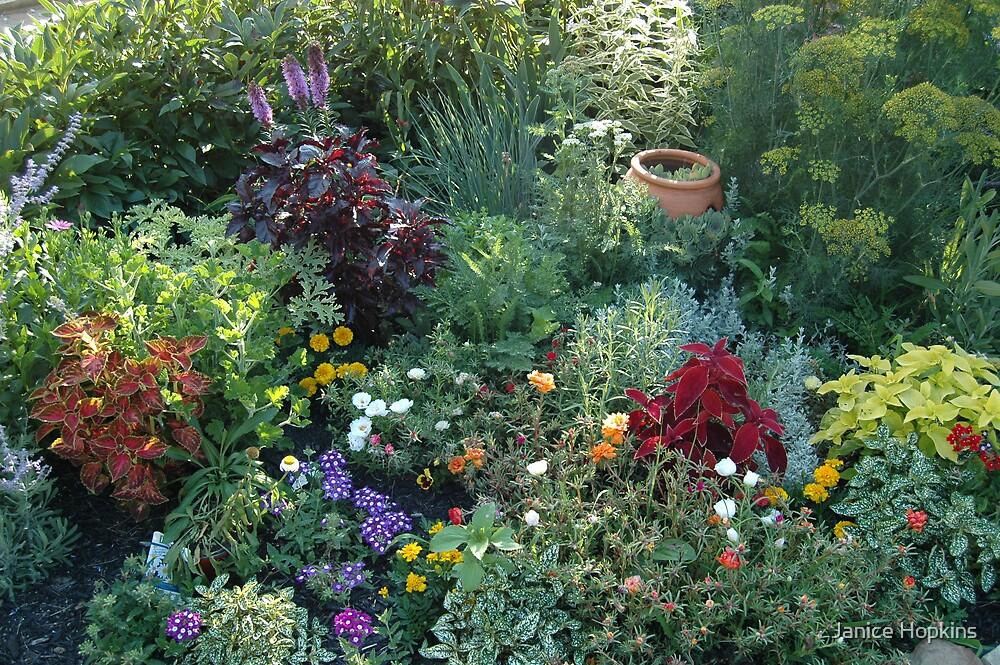 Flowers in full bloom by Janice Hopkins