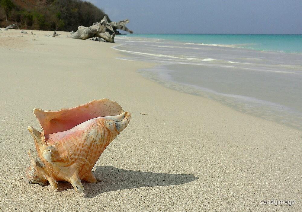 caribbean wildlife by sandyimage