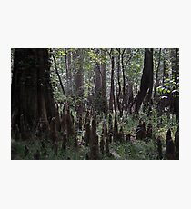 Swamp Gnomes Photographic Print