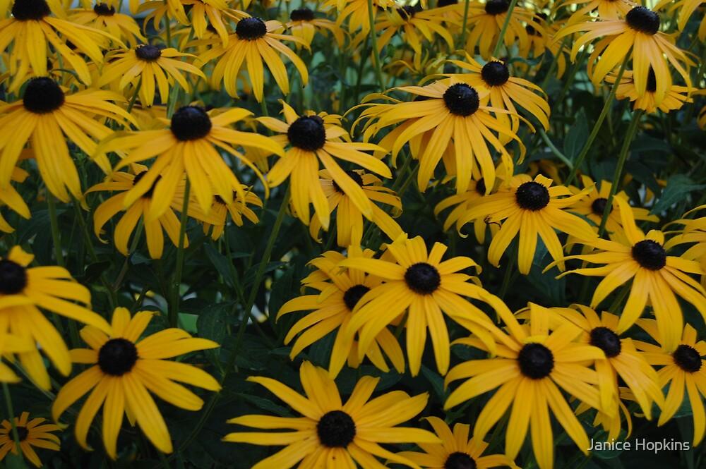 Sea of Yellow by Janice Hopkins