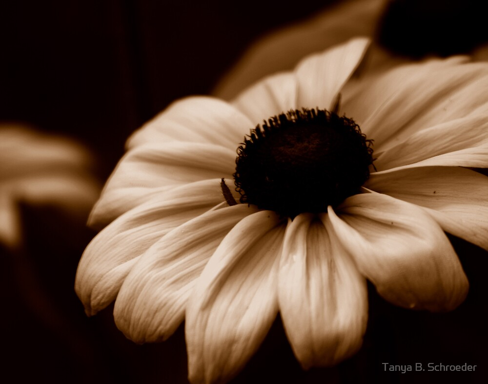 Brown-Eyed Girl by Tanya B. Schroeder