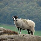King of the Hill by Andy Harris