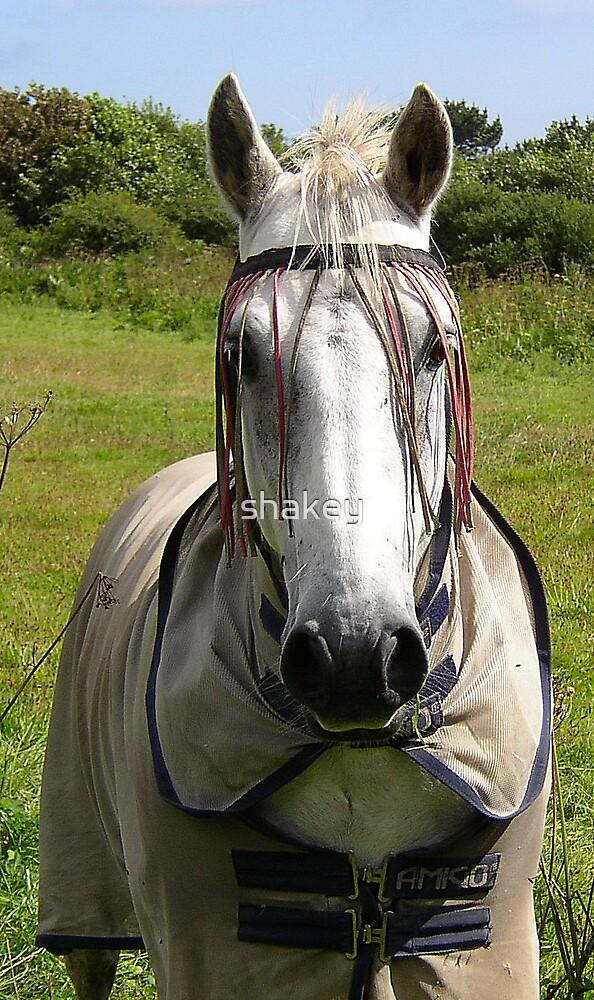Hippy Horse by shakey