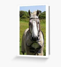 Hippy Horse Greeting Card