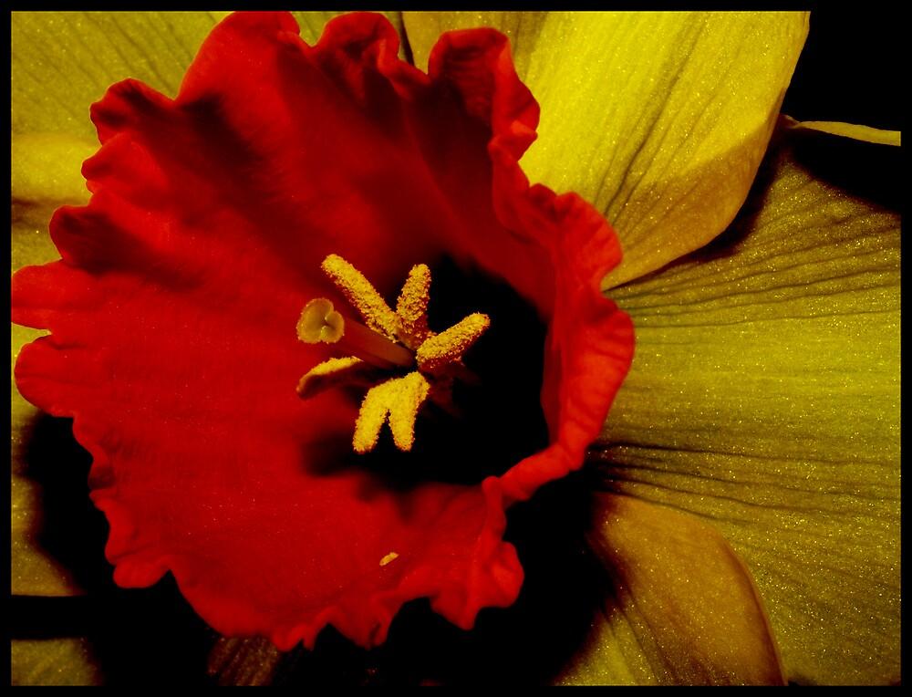Spring Flower by Jenni77