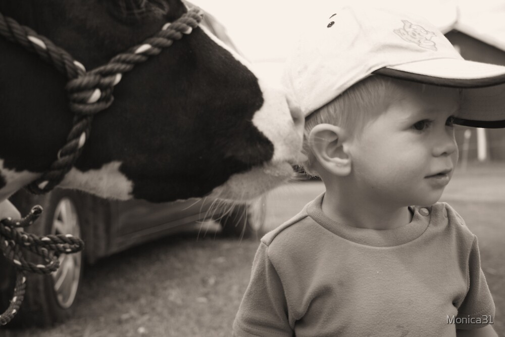"""""""Cow Kisses"""" by Monica31"""