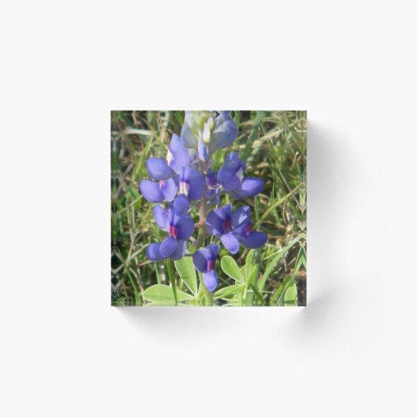 Bluebonnet - best viewed larger Acrylic Block