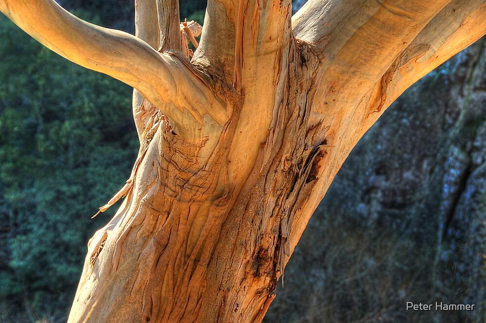 Bark by Peter Hammer