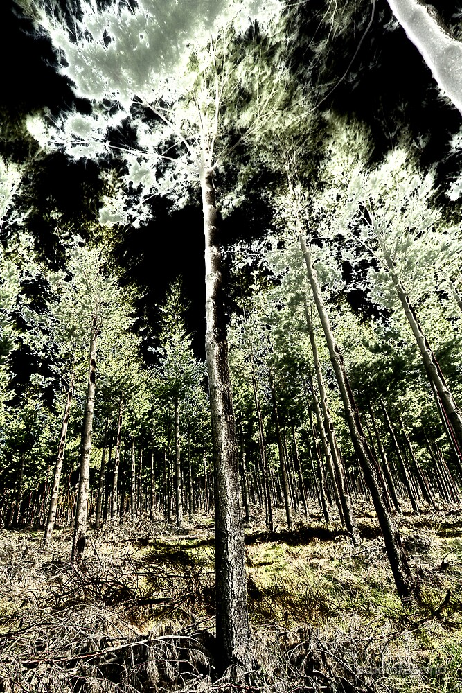 forest by studiofascino