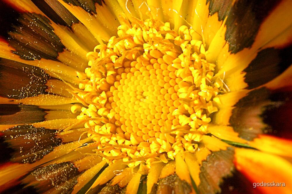 sun beauty by godesskara