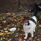 Cat Portrait, Brunswick Community Garden, Jersey City by lenspiro