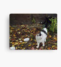 Cat Portrait, Brunswick Community Garden, Jersey City Canvas Print