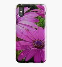 Purple And Pink Tropical Daisy Flower iPhone Case