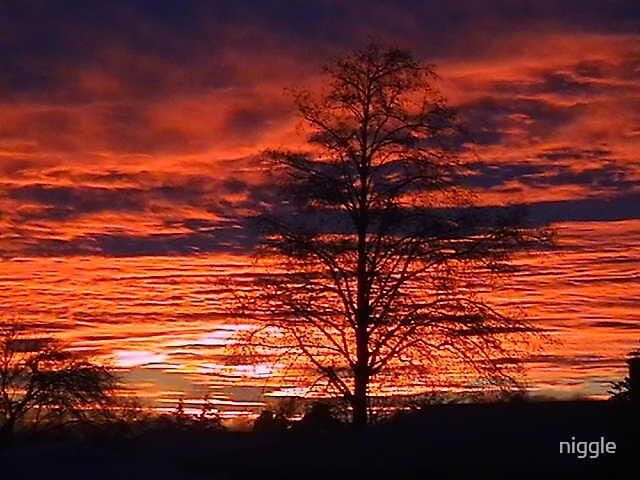 Sunrise by niggle