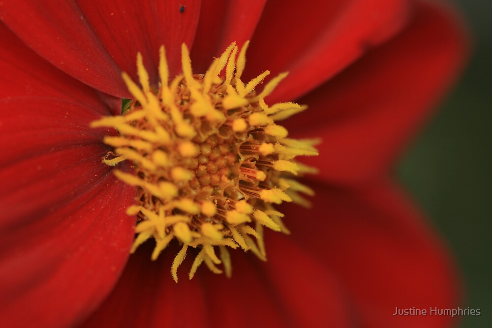 Red & Gold by Justine Humphries
