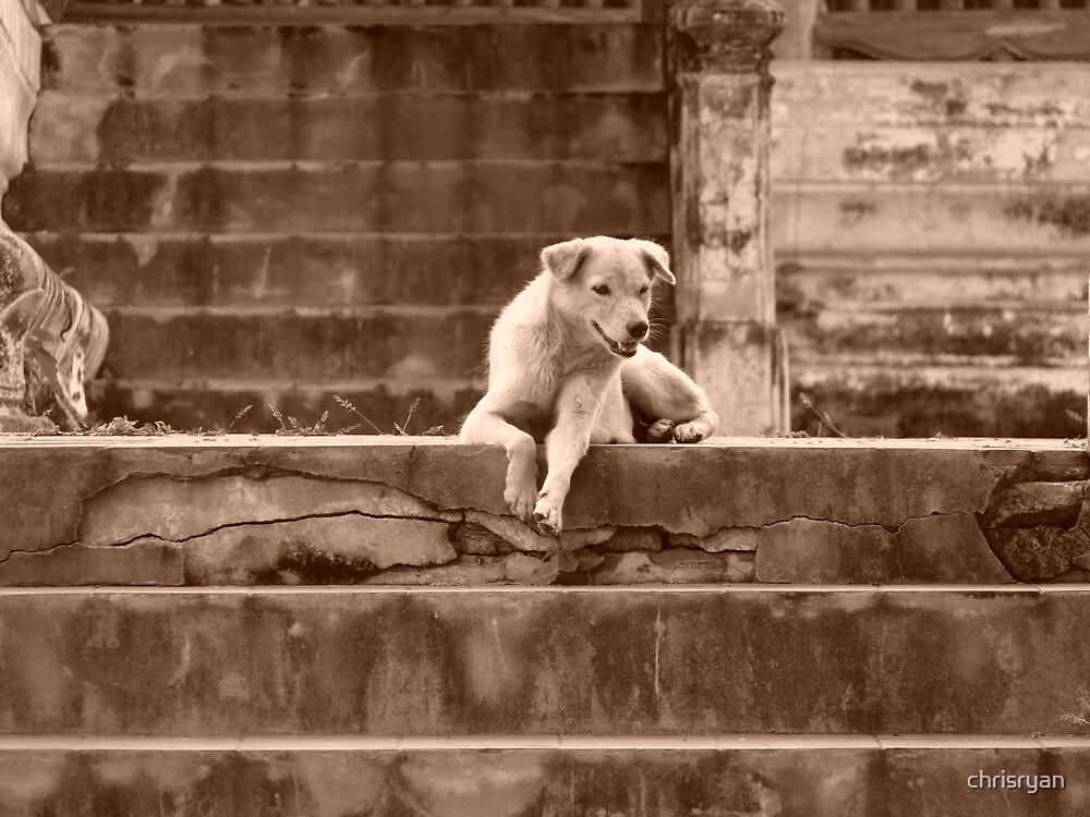 Step Dog by chrisryan