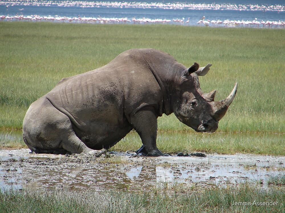 White Rhino by Jemma Assender