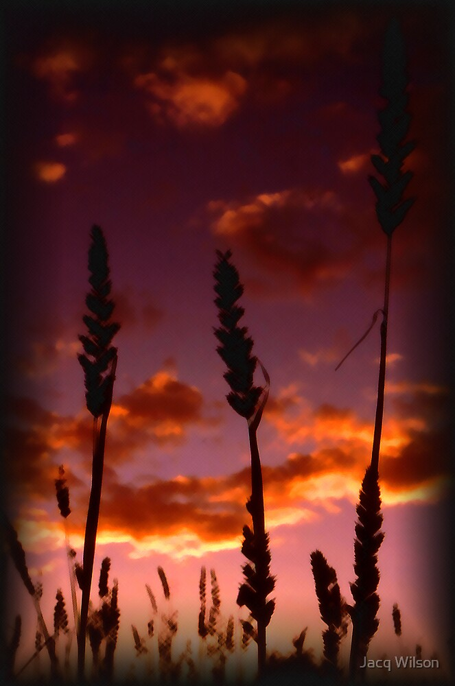 Wheat fields by Jacq Wilson