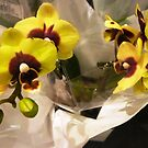 Beautiful Yellow Orchid at the Market by EdsMum
