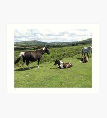 wild ponies on the moors in England Art Print