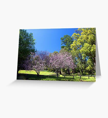 Two Pink Cherry Blossom Trees Greeting Card