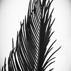 Palm: The Abstract in Black by PolkaDotStudio