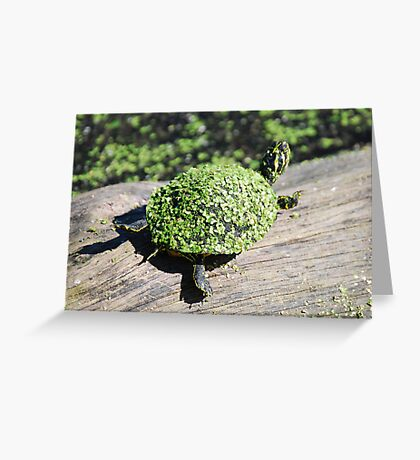 The Duckweed Sweater Greeting Card